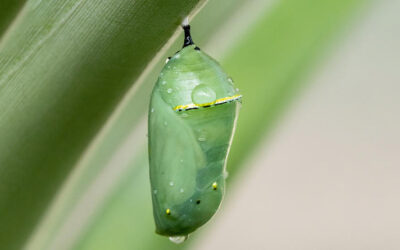 Metamorphosis: another name for Enlightenment?